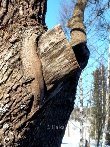 puun leikkaus on onnistunut huonosti